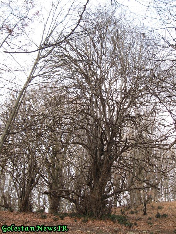 طبيعت زيباي پاييزي از منطقه كوهميان شهرستان آزادشهر