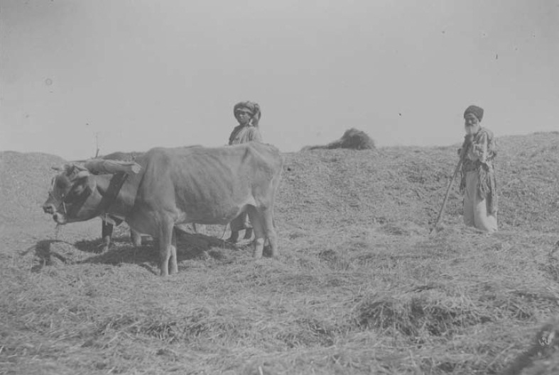 احتکار توسط نیروهای انگلیسی