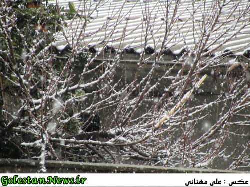 بارش برف در علی آباد
