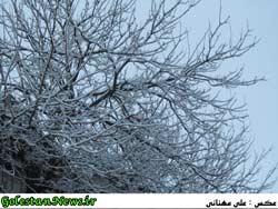 بارش برف در گلستان