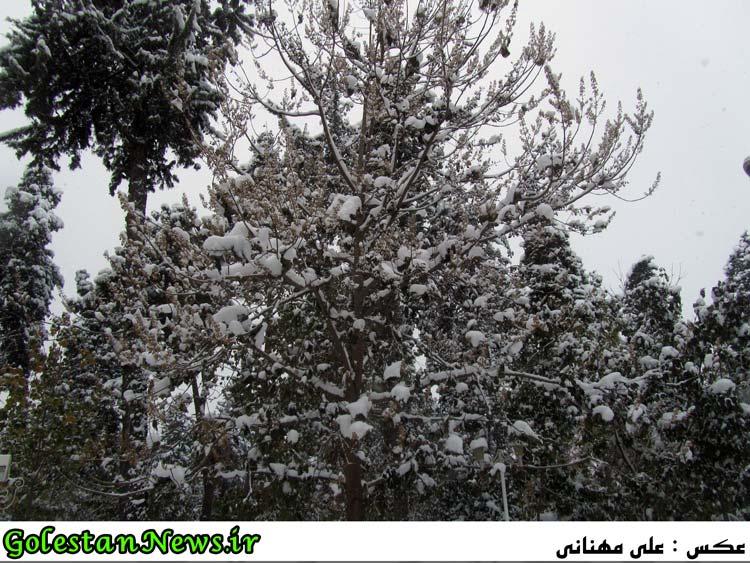برف پاییزی در علی آباد کتول استان گلستان